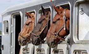 правила за превоз на животни